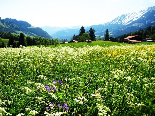 austria 32 (2)