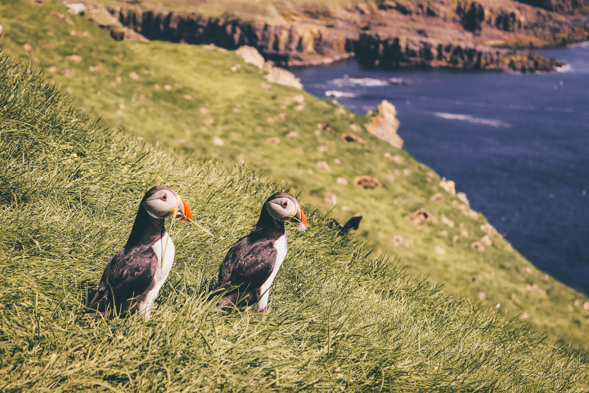 faroe islands travel guide, visit faroe islands, faroe islands by car, puffin colony